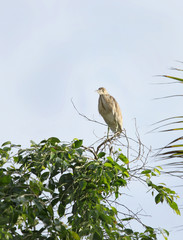A beautiful Heron sitting on a tree