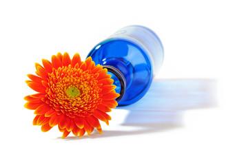 Orange gerbera flower in blue bottle throwing a shadow