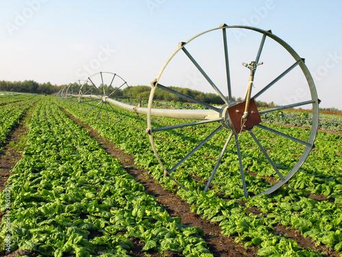 vegetable irrigation