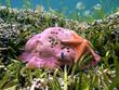Hard coral and starfish