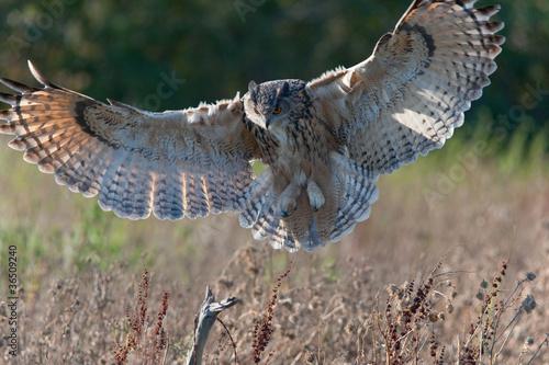 Canvas Uil Eagle Owl