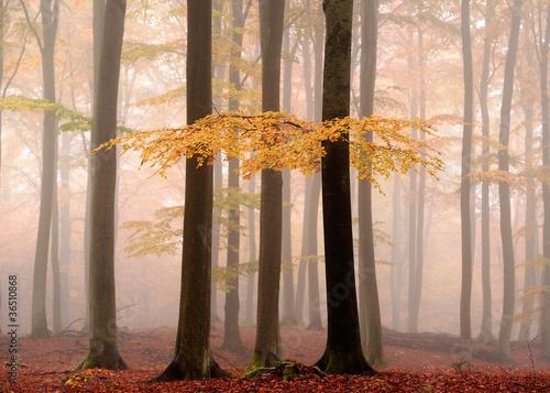 Fototapeten,herbst,braun,farbe,november