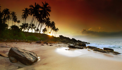 Sunrise under the palms