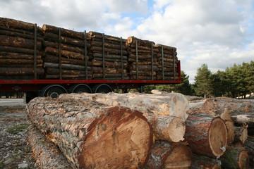 Exploitation du bois - Energie renouvelable