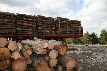 Sylviculture - Transport du bois - Stock de carbone