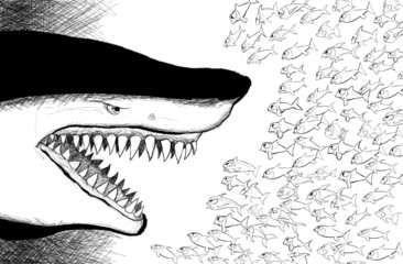 shark facing small fishes