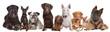 Fototapeten,hund,dackel,bull terrier,chihuahua
