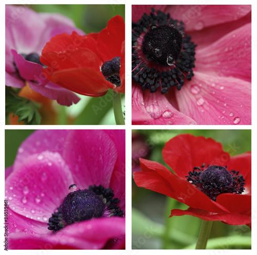anemones collage