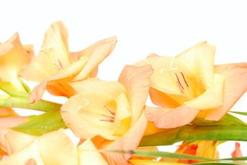 Flower on a white background, studio shoot.