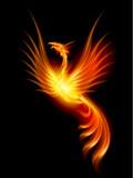 Fototapety Burning phoenix
