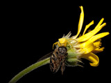 Death in nature - spider eating fly on flower poster