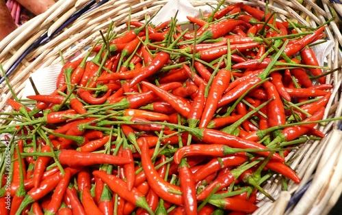 Fotomural pimienta bird chile p jaro rojo for Fotomurales chile precios