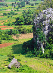 The Viñales valley in Cuba, a famous tourist destination