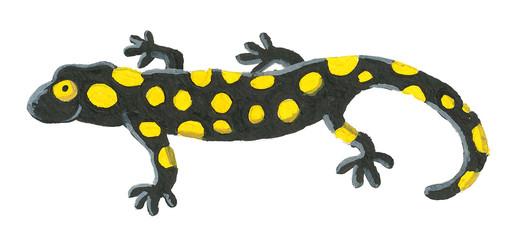 Cute salamander