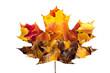 Fall maple, hawthorn and viburnum  leaves