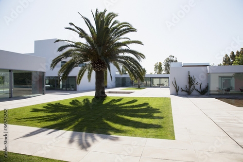 Palm tree in courtyard of modern house