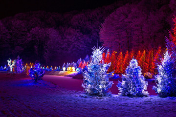 Christmas fantasy - pine trees in x-mas lights