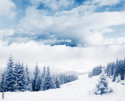 Winter - 36576299