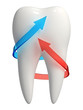 3d healthy tooth icon - Red and blue arrows