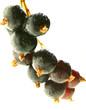 Black currant,