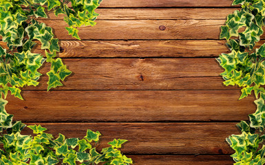 edera sul legno