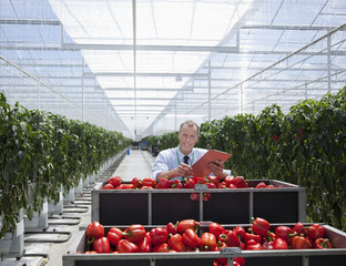 Worker examining produce in greenhouse