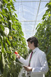 Scientist examining produce in greenhouse