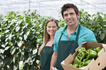 Workers with produce in greenhouse