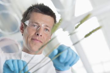Scientist examining wheat stalks in lab