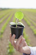 Scientist holding potted plant in field