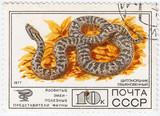 Russia, shows Venomous snake poster