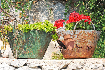 Red pelargonium in rusty containers in the sun