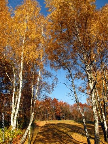 Naklejka colorful autumn forest