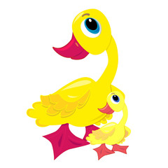 vector baby duck with mother. isolated characters