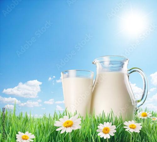 Milk jug and glass on the grass with chamomiles. On a background