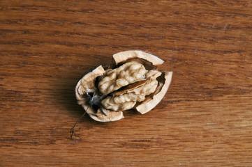 Fresh walnut open