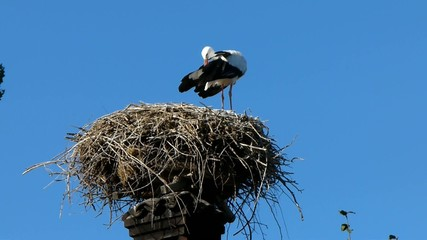 Cicogne nel nido 2
