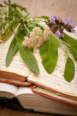 Alte Schriften und frische Heilpflanzen