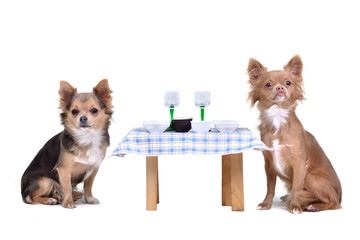Dogs enjoying their meal