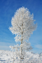 Tree in snow, winter sesone