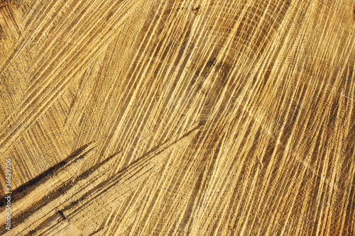 Detail of wooden cut texture - rings and saw cuts - oak