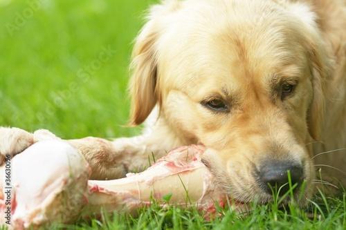 hund und knochen