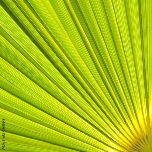 Abstract palm leaves