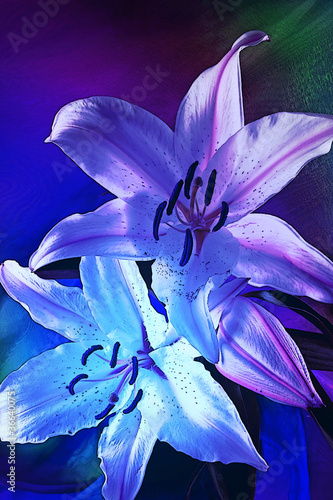 Graphic of Lillies in blue light No.2
