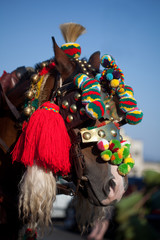 cavallo addobbato per festa paesana