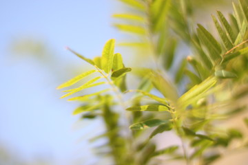 Green spring leafs over blue sky. Shallow DOF