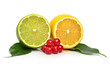 Citrus fruits and cranberry