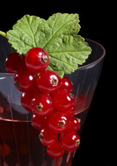 Redcurrant on glass