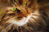 Tabby cat close-up. Simulation of old painting style