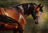Fototapety The Thoroughbred classical oil portrait